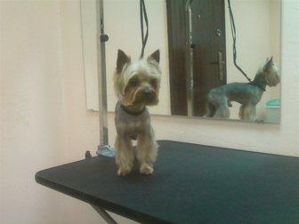 Скачать изображение Услуги для животных стрижка собак и кошек 33266765 в Москве