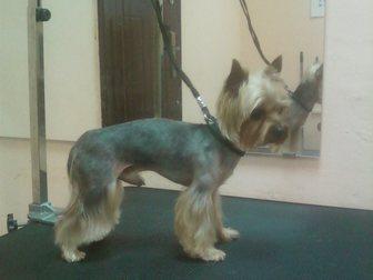 Свежее изображение Услуги для животных стрижка собак и кошек 33266765 в Москве