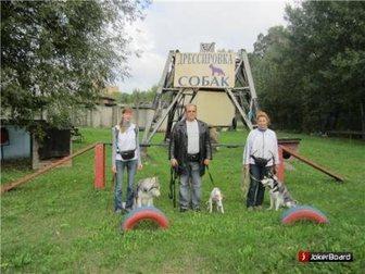 Скачать foto  дрессировка собак в северном округе 33380089 в Москве