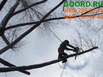 Свежее фотографию Разные услуги Санитарная обрезка деревьев в Москве 33415543 в Москве