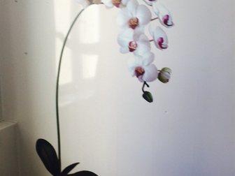 Скачать бесплатно foto  Парикмахерская в Зеленограде в корп, 2005 33747443 в Москве