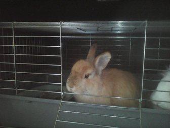 Скачать фотографию Грызуны Декоративные кролики 34008463 в Москве