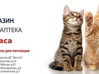 Скачать фото Продажа домов УшиХвост- услуги для животных! 34481253 в Москве