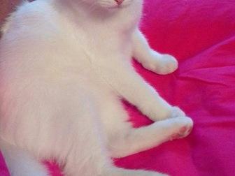 Скачать бесплатно фото  Обаятельный котик Тотошка ищет любящих маму и папу, 43913572 в Москве