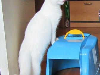 Смотреть фото  Обаятельный котик Тотошка ищет любящих маму и папу, 43913572 в Москве