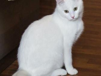 Свежее фото  Обаятельный котик Тотошка ищет любящих маму и папу, 43913572 в Москве