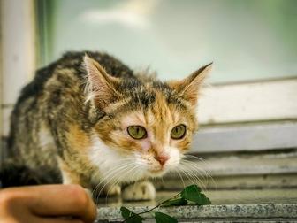 Просмотреть фотографию  Молодая кошечка Дольче ищет дом! 43992490 в Москве