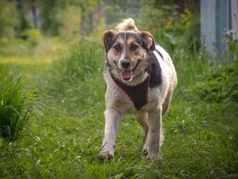 Уникальное изображение  Добрый пес Рони в добрые руки, 44555989 в Москве