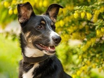 Уникальное изображение  Собака Нора, в дар, в добрые руки, 49959965 в Москве