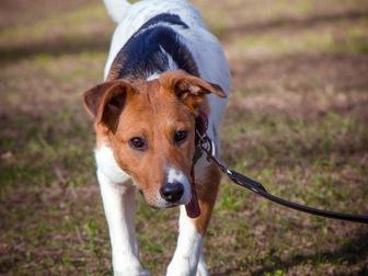Уникальное изображение  Самый милый щенок Майло в добрые руки! 50050702 в Москве