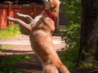 Увидеть foto  Изящная, красивая собака в добрые руки! 50087116 в Москве