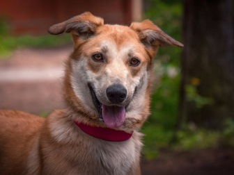 Смотреть фотографию  Изящная, красивая собака в добрые руки! 50087116 в Москве