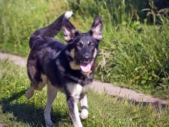 Просмотреть foto  Чудесная собака Лада в добрые руки, 50193839 в Москве