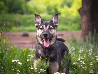 Скачать бесплатно foto  Классный пес Ронни в добрые руки, 50196411 в Москве
