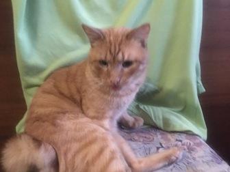 Просмотреть фото  Особенный котик Лев разыскивает самые ответственные руки, 50812315 в Москве