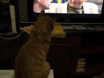 Увидеть foto  Особенный котик Лев разыскивает самые ответственные руки, 50812315 в Москве