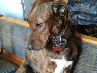 Просмотреть foto  Очаровательная собачка Терри ищет дом! 56681709 в Москве