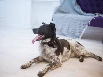 Новое изображение  Красивая собака Тори ищет семью, 57120020 в Москве