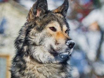 Просмотреть фотографию  Красивая собака Луна в добрые руки, 57234097 в Москве