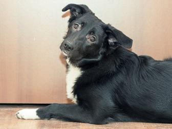 Смотреть foto  Чудесный щенок Муха ищет дом, 58071485 в Москве