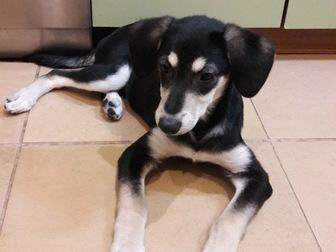 Скачать бесплатно foto  Очаровательные щенки Боня и Таксена ищут дом, 58365206 в Москве