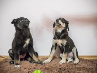 Просмотреть фотографию  Очаровательные щенки Боня и Таксена ищут дом, 58365206 в Москве