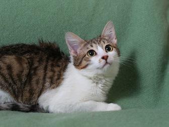 Скачать бесплатно изображение  Очаровательная кошечка Люсси ищет дом! 58627200 в Москве