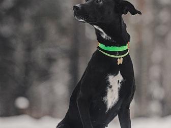 Скачать фото  Ищет дом самая чудесная собака Ирада! 67656535 в Москве