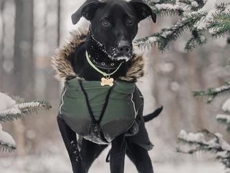Смотреть foto  Ищет дом самая чудесная собака Ирада! 67656535 в Москве