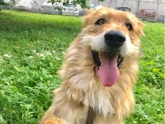 Свежее изображение  Космический пёс, звать УХО! 67668201 в Москве