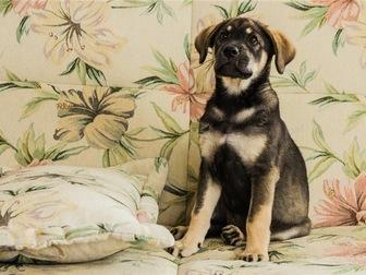 Скачать бесплатно фотографию  Чудесный щенок Адель в добрые руки, 67704400 в Москве