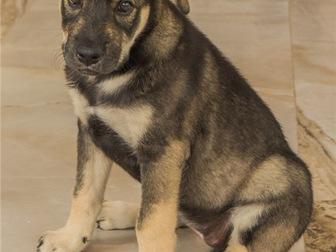 Свежее foto  Чудесный щенок Адель в добрые руки, 67704400 в Москве