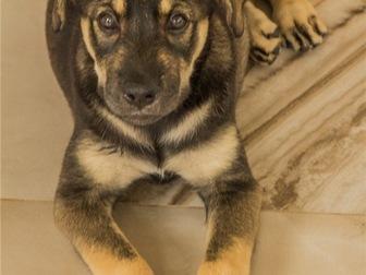 Смотреть изображение  Чудесный щенок Адель в добрые руки, 67704400 в Москве