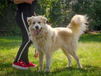 Скачать бесплатно фото  Шикарный пёс Нортон в добрые руки, 68125562 в Москве