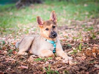Скачать фото  Чудесный щенок Кнопочка в добрые руки, 68128810 в Москве