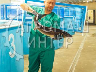 Просмотреть фото Разное Рыбная ферма на 2 тонны Сельское хозяйство/ рыбоводство 72586692 в Белгороде
