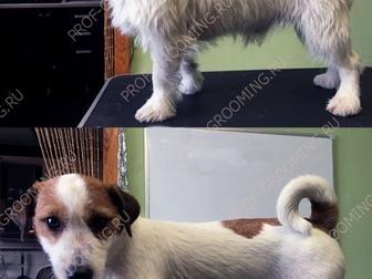 Просмотреть foto Услуги для животных Стрижка собак, тримминг, стриппинг, 8728620 в Москве