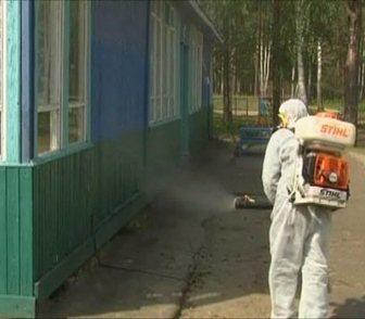 Изображение в   Обработка от комаров, клещей, мошки, ос, в Нижнем Новгороде 0
