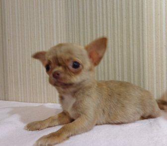 Изображение в Собаки и щенки Продажа собак, щенков Продается очень красивая породная девочка в Москве 15000