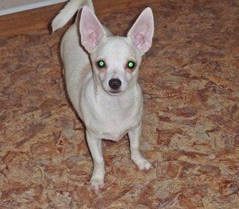 Фото в Собаки и щенки Продажа собак, щенков Продается в качестве домашнего любимца подрощенный в Москве 7000