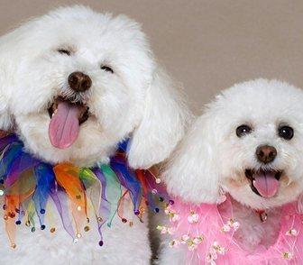 Фото в Домашние животные Услуги для животных Стрижка собак разнообразных пород в парикмахерской в Москве 0