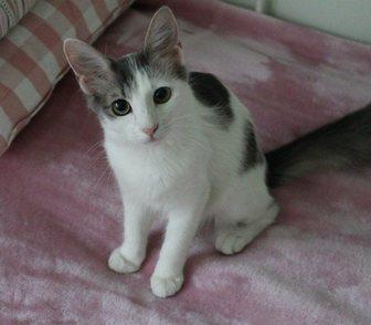 ����������� �   Kitty - �������� ����� �������� � ������, � ������ 0