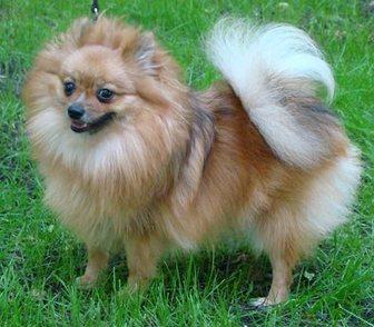 Изображение в Собаки и щенки Продажа собак, щенков Предлагается в качестве домашнего любимца в Москве 15000