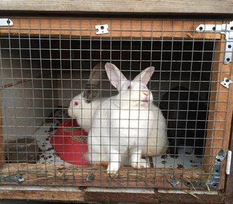 Фотография в Домашние животные Другие животные Парное мясо кролика и живые крольчата пород в Москве 500