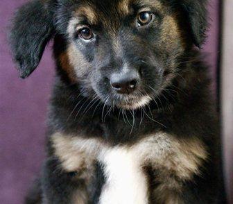 Фото в Собаки и щенки Продажа собак, щенков Отличный щенок Пуш, в добрые руки.   Моя в Москве 100