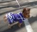 Фото в Собаки и щенки Одежда для собак Предлагаю недорогую вязаную на спицах одежду в Москве 0