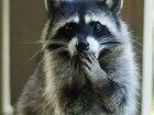 Уникальное изображение  Приглашаем посетить Веселый контактный зоопарк 39021939 в Муроме