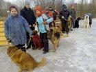 Свежее foto Разное Дрессировка собак Мытищи 33056744 в Мытищи