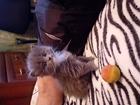 Увидеть фотографию Отдам даром - приму в дар Отдаю котят 39136620 в Мытищи