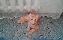 Кот Рыжик в добрые руки